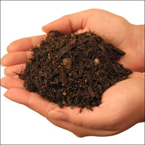 soil for chilli plants