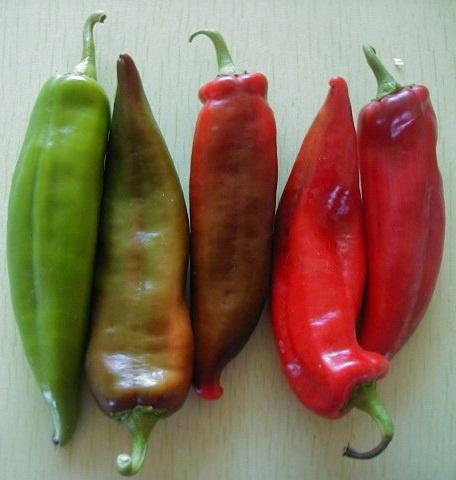 Anaheim Chili Peppers