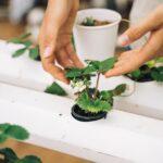 Grow Chilies Indoors